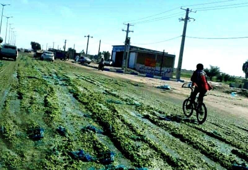چرا کشاورزان کرمانی خیارها را به خیابان ریختند؟ ، اختلاف قیمت 300 تومان تا 3000 تومان!