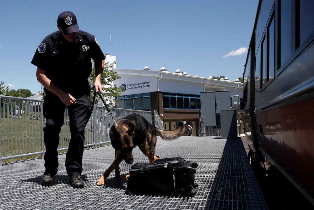 آموزش سگ های یابنده مواد منفجره ایمن می شود